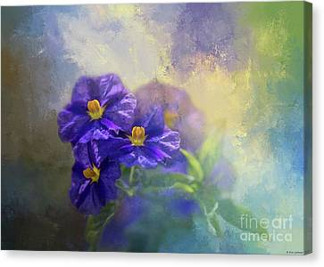 Solanum Canvas Print