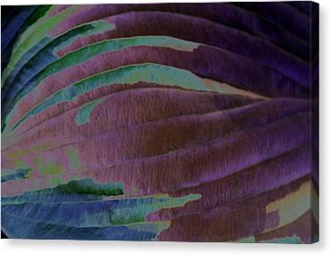 Solar Amazon Canvas Print by Carolyn Stagger Cokley