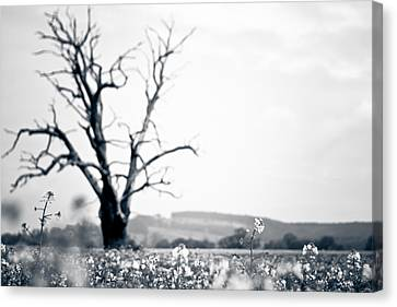 Solemn Oak Canvas Print by Justin Albrecht
