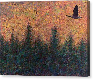 Solitary Goose Canvas Print by James W Johnson