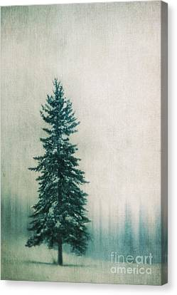 Solitary Tree Canvas Print by Priska Wettstein