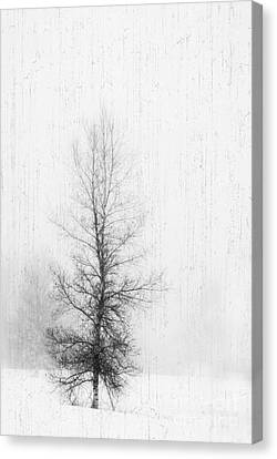 Canvas Print featuring the photograph Solitude  by Alana Ranney