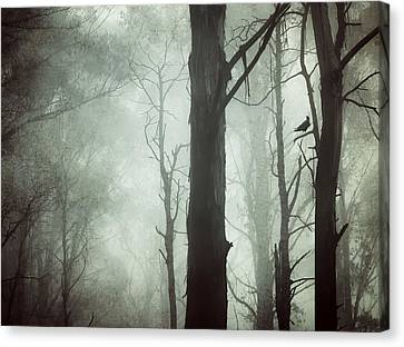 Canvas Print - Solitude by Amy Weiss