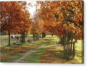 Solitude - Autumn In Pishiobury Park Canvas Print