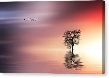 Solitude Canvas Print by Bess Hamiti