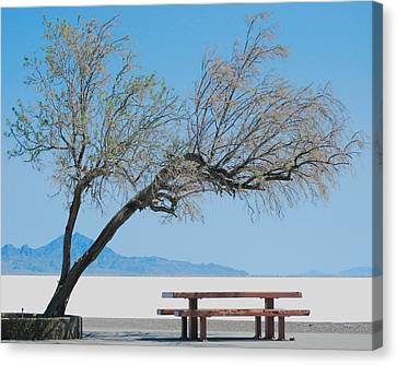 Solitude Canvas Print by Maggy Marsh