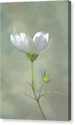 Canvas Print featuring the photograph Solo Cosmo by Ann Bridges