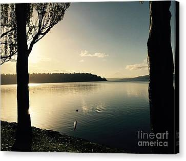 Solo Duck In The Sun Canvas Print