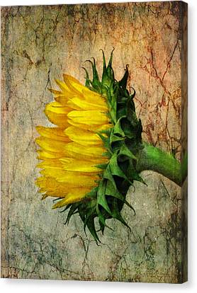 Canvas Print featuring the photograph Solo by John Rivera