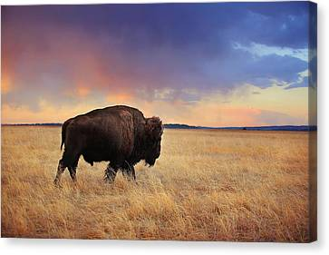 March Across The Prairie Canvas Print by Deborah Johnson