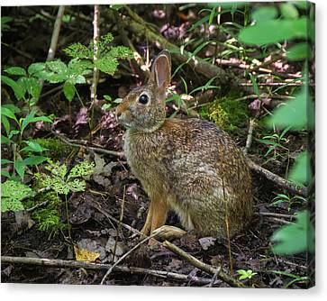 Canvas Print featuring the photograph Some Bunny Stopped By by Bill Pevlor