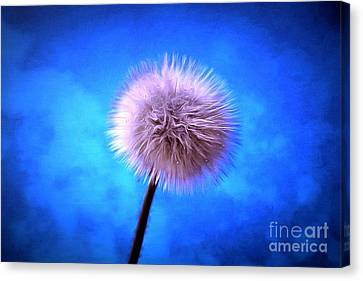 Some Kind Of Magic Canvas Print by Krissy Katsimbras