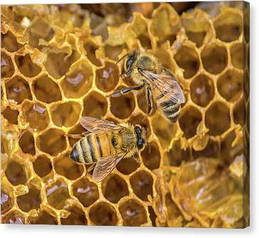 Canvas Print featuring the photograph Some Of Your Beeswax by Bill Pevlor