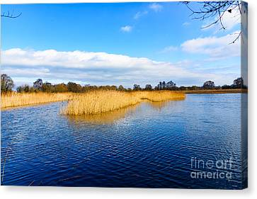 Canvas Print featuring the photograph Somerset Levels by Colin Rayner