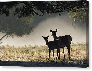Something In The Mist Canvas Print