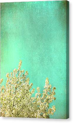 Something Special Canvas Print by Kevin Bergen