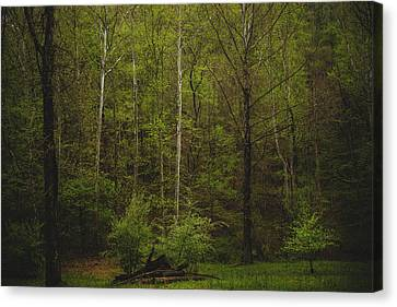 Canvas Print featuring the photograph Somewhere In The Woods by Shane Holsclaw