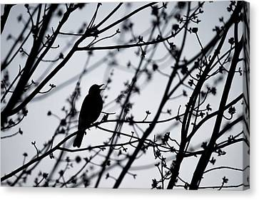 Canvas Print featuring the photograph Song Bird Silhouette by Terry DeLuco