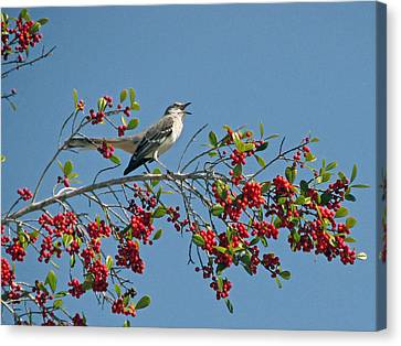 Canvas Print featuring the photograph Song Of The Mockingbird by Peg Urban