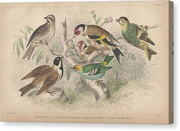 Songbirds Canvas Print by Dreyer Wildlife Print Collections