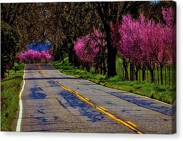 Sonoma Country Road Canvas Print by Garry Gay