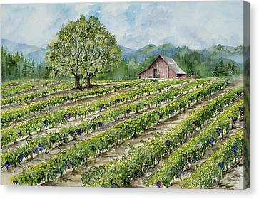 Sonoma County Vineyard Canvas Print by Virginia McLaren