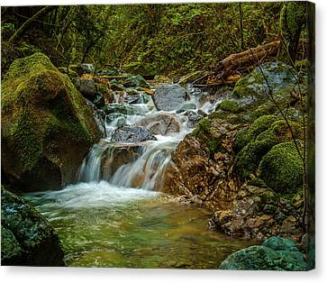 Sonoma Valley Creek Canvas Print by Bill Gallagher