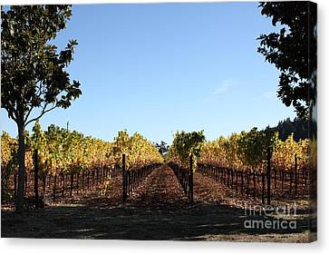 Pastoral Vineyard Canvas Print - Sonoma Vineyards - Sonoma California - 5d19314 by Wingsdomain Art and Photography