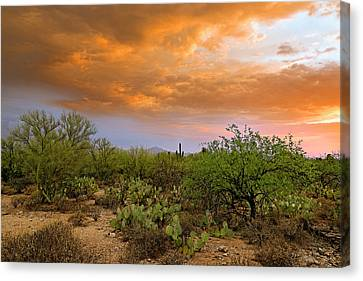 Canvas Print featuring the photograph Sonoran Desert H11 by Mark Myhaver