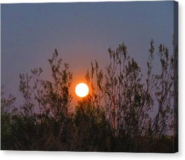 Sonoran Desert Harvest Moon Canvas Print