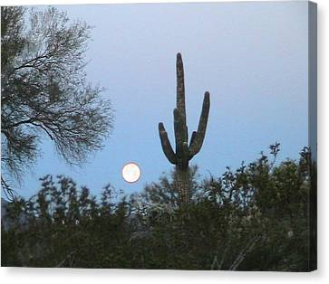 Sonoran Desert Moonset Canvas Print