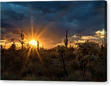 Canvas Print featuring the photograph Sonoran Gold At Sunset  by Saija Lehtonen