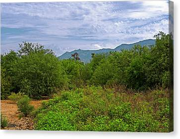 Canvas Print featuring the photograph Sonoran Greenery H30 by Mark Myhaver