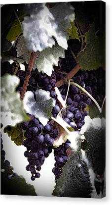 Vine Grapes Canvas Print - Soon To Be Wine by Cabral Stock