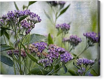 Sophies Garden Canvas Print