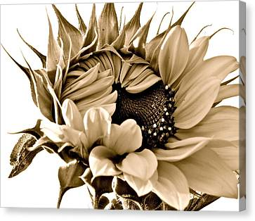 Sophisticated Canvas Print by Gwyn Newcombe