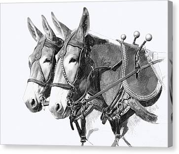 Pencil Drawing Canvas Print - Sorrel Mule Team by Bethany Caskey