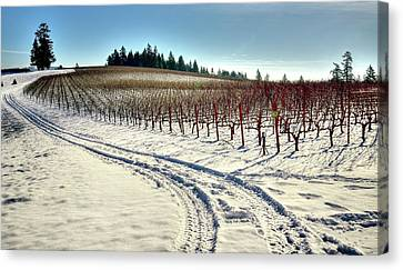 Soter Vineyard Winter Canvas Print by Jerry Sodorff