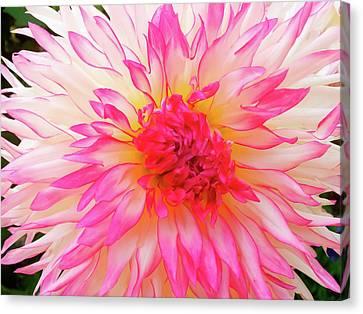 Flowerrs Canvas Print - Soul Of Dahlia by Gerlya Sunshine