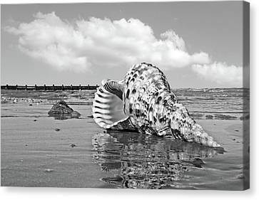 Sounds Of The Ocean - Trumpet Triton In Black And White Canvas Print
