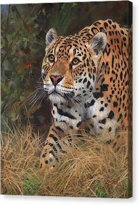 South American Jaguar Big Cat Canvas Print