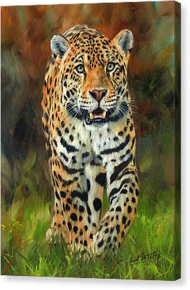 South American Jaguar Canvas Print by David Stribbling