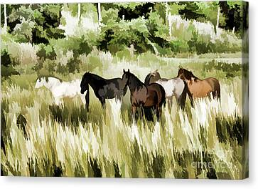 South Dakota Herd Of Horses Canvas Print by Wilma Birdwell