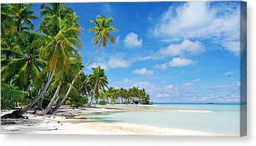 Michael Sweet Canvas Print - South Pacific Palms by Michael Sweet