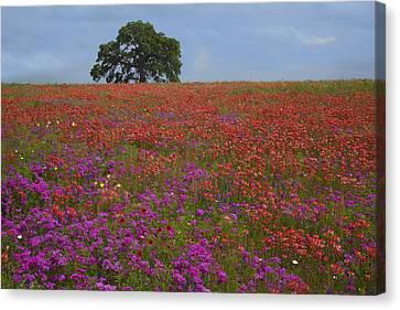 South Texas Bloom Canvas Print