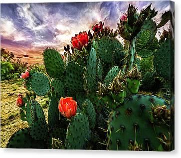 South Texas Sunset Canvas Print by Matt Smith