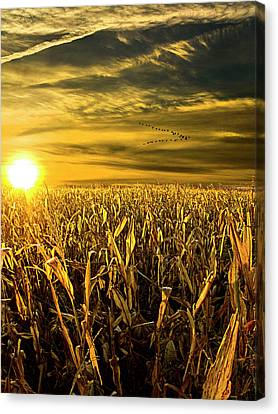 Natur Canvas Print - Southbound by Phil Koch