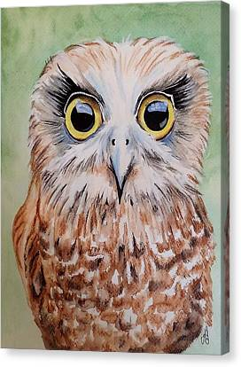 Southern Boobook Owl Canvas Print by Anne Gardner
