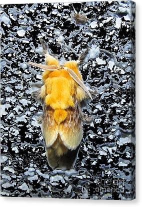 Flannel Moth Canvas Print - Southern Flannel Moth by Joshua Bales