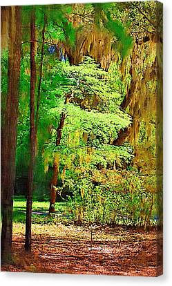 Canvas Print featuring the photograph Southern Forest by Donna Bentley